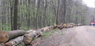 Jandarmii au recuperat peste 80 de metri cubi de lemne