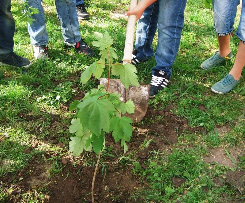 Asociațiile de proprietari, invitate să solicite ajutorul Primăriei pentru plantarea de arbori