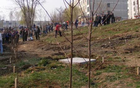 plantari arbori
