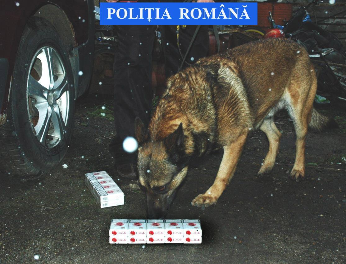 CÂINELE POLIŢIST ODEK A DEPISTAT ŢIGĂRI DE CONTRABANDĂ ÎN PIAŢA SMIRODAVA