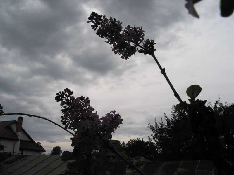 Vremea se răcește accentuat. Zile cu vânt puternic și precipitații mixte
