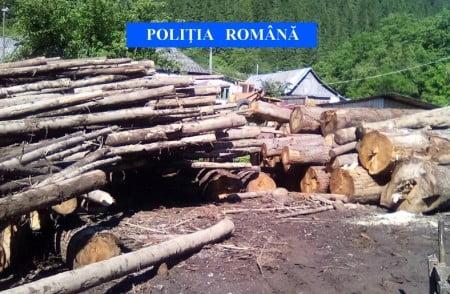 lemne confiscate IPJ Neamt 16iunie 3
