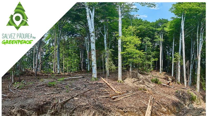 salvezpadurea.ro – platformă online pentru a reclama tăierile ilegale de arbori