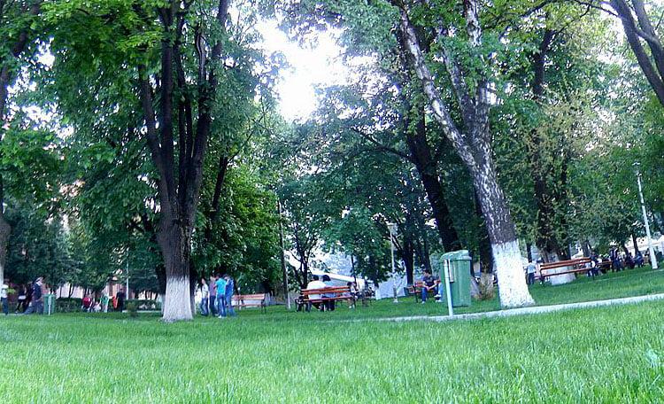 Avem 1.950 de arbori în Roman. Zeci de copaci vor fi doborâţi