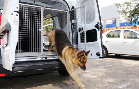 Câinii poliţişti, în căutare de conductori