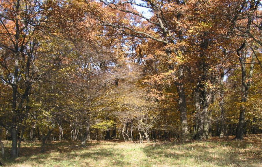 Plecați la cules ciuperci, s-au rătăcit în pădurea de la Dealul Mărului