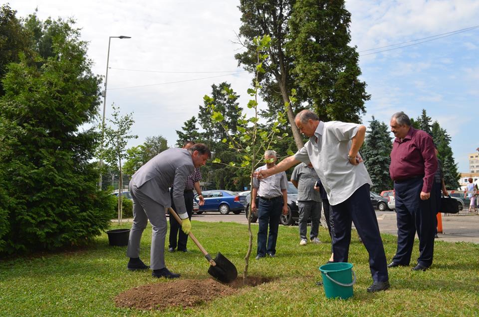 Copac plantat după primul an de mandat