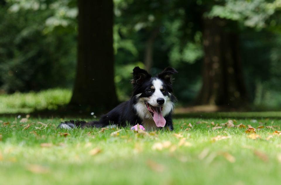 Parcuri dedicate și animalelor de companie, la Roman