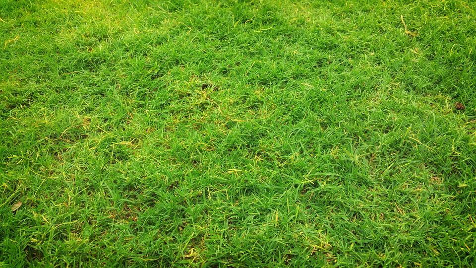 Primăria scoate la licitație 61 de hectare de pășune