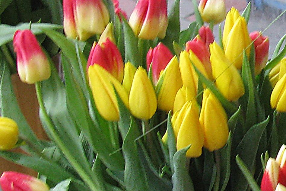 Femeile în vârstă, sărbătorite cu ocazia zilei de 8 Martie