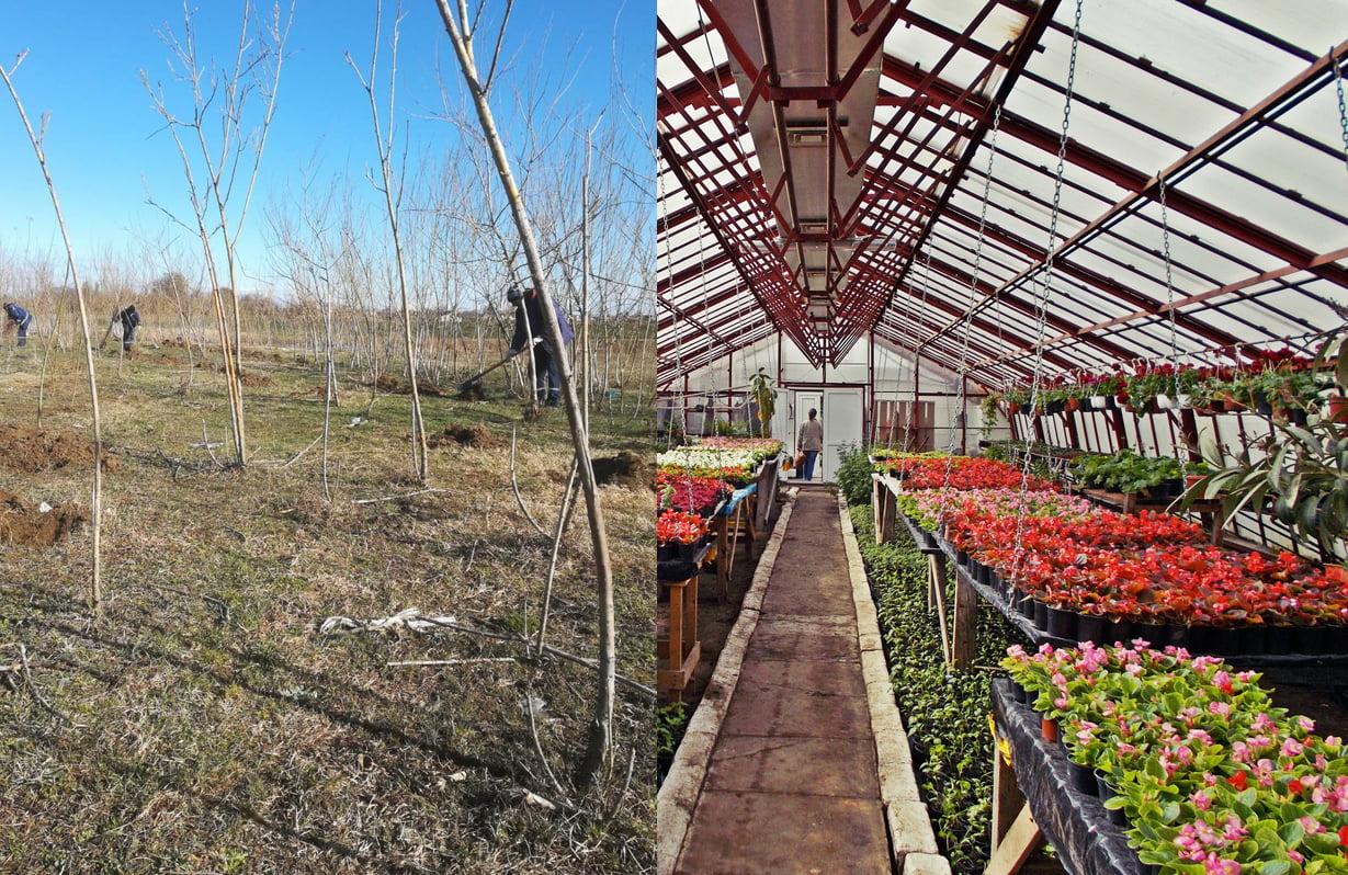 Plantări de flori și arbori, în cadrul campaniei de primăvară, în Roman