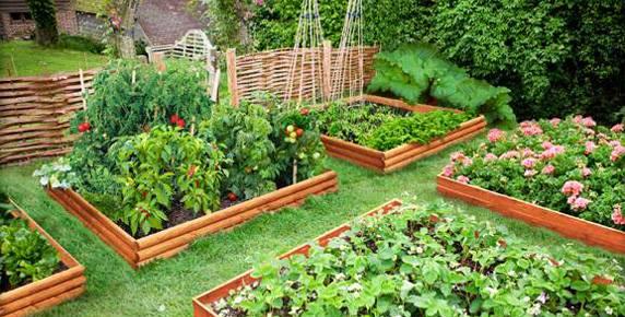 Grădini de zarzavat în cinci unități de învățământ din Roman