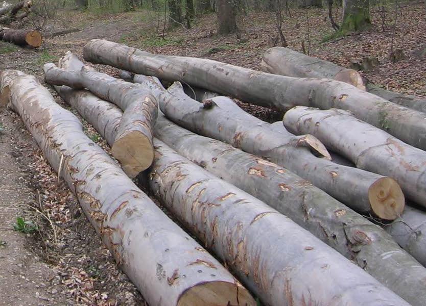 Sancțiuni și lemn confiscat valoric în valoare de peste 1,25 milioane de lei, la o firmă din Săbăoani