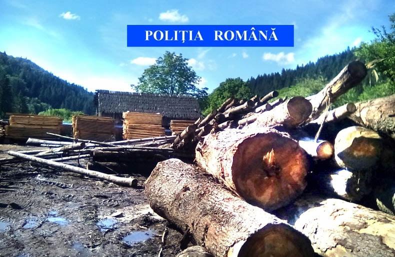 Polițiștii au confiscat în acest an mii de metri cubi de lemne