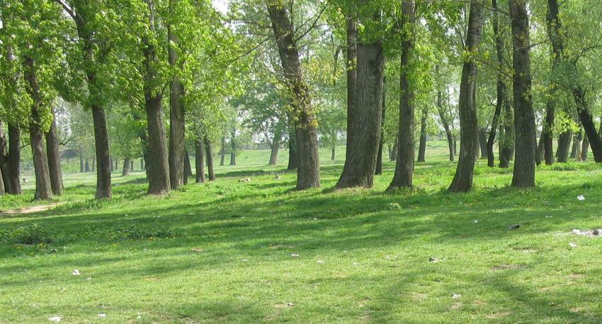 Parcul Zăvoi ar putea fi amenajat pe fonduri europene