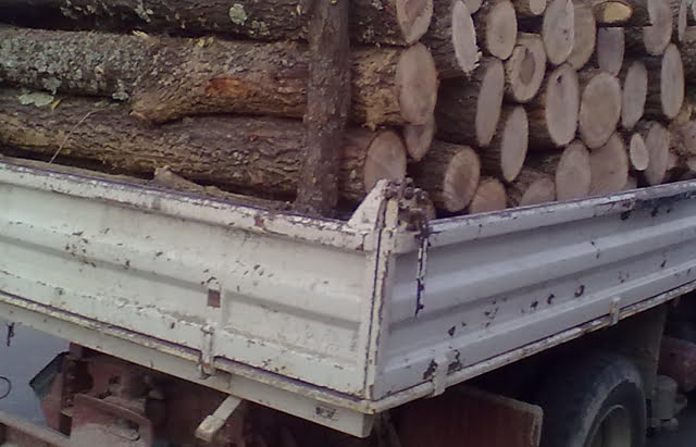 Transport de lemne fără documente, confiscat de polițiști
