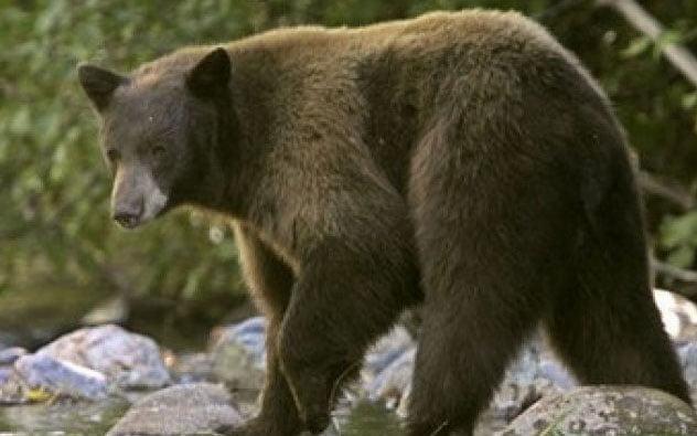 Un romaşcan a alertat jandarmii după ce a văzut un urs