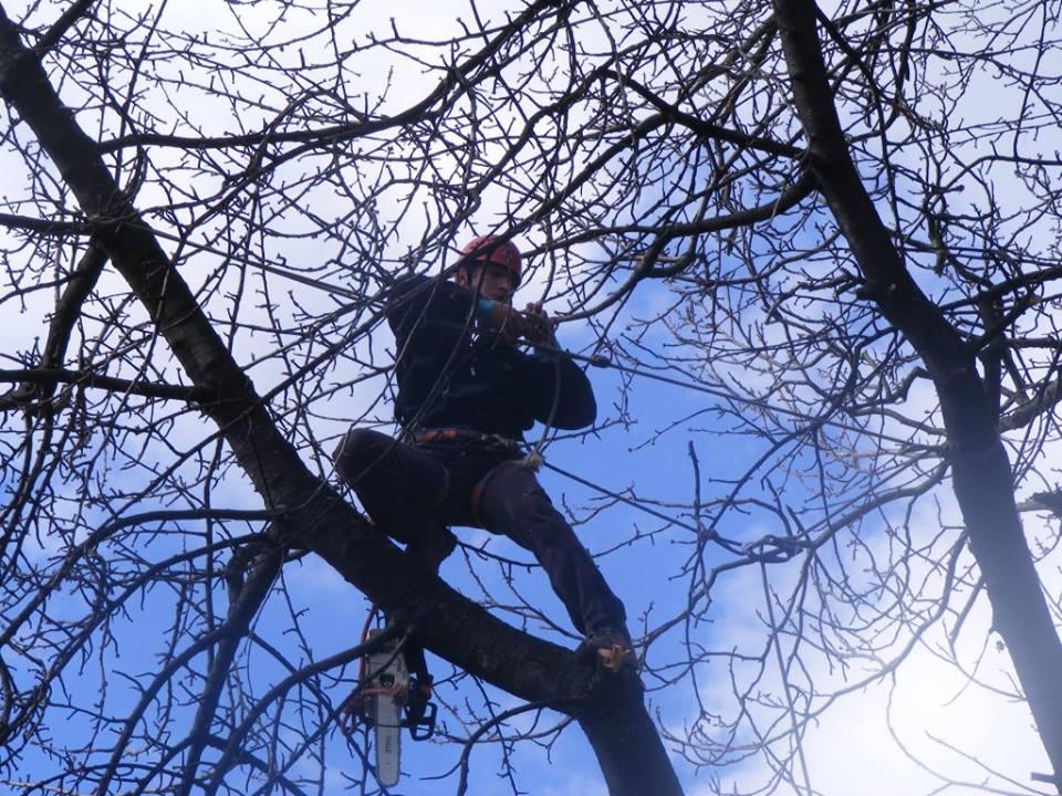 Se doboară 83 de copaci din mai multe zone din oraș