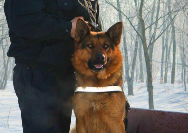 Minoră fugită în pădure, căutată de polițiști cu câinele de urmă