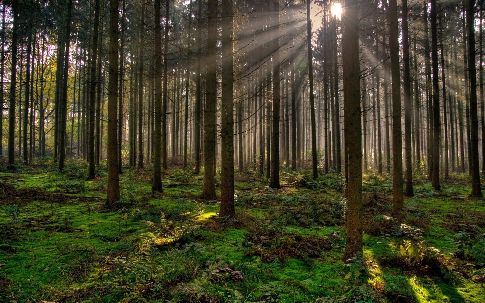 Pădurea PSD Roman, de la buruieni se va usca