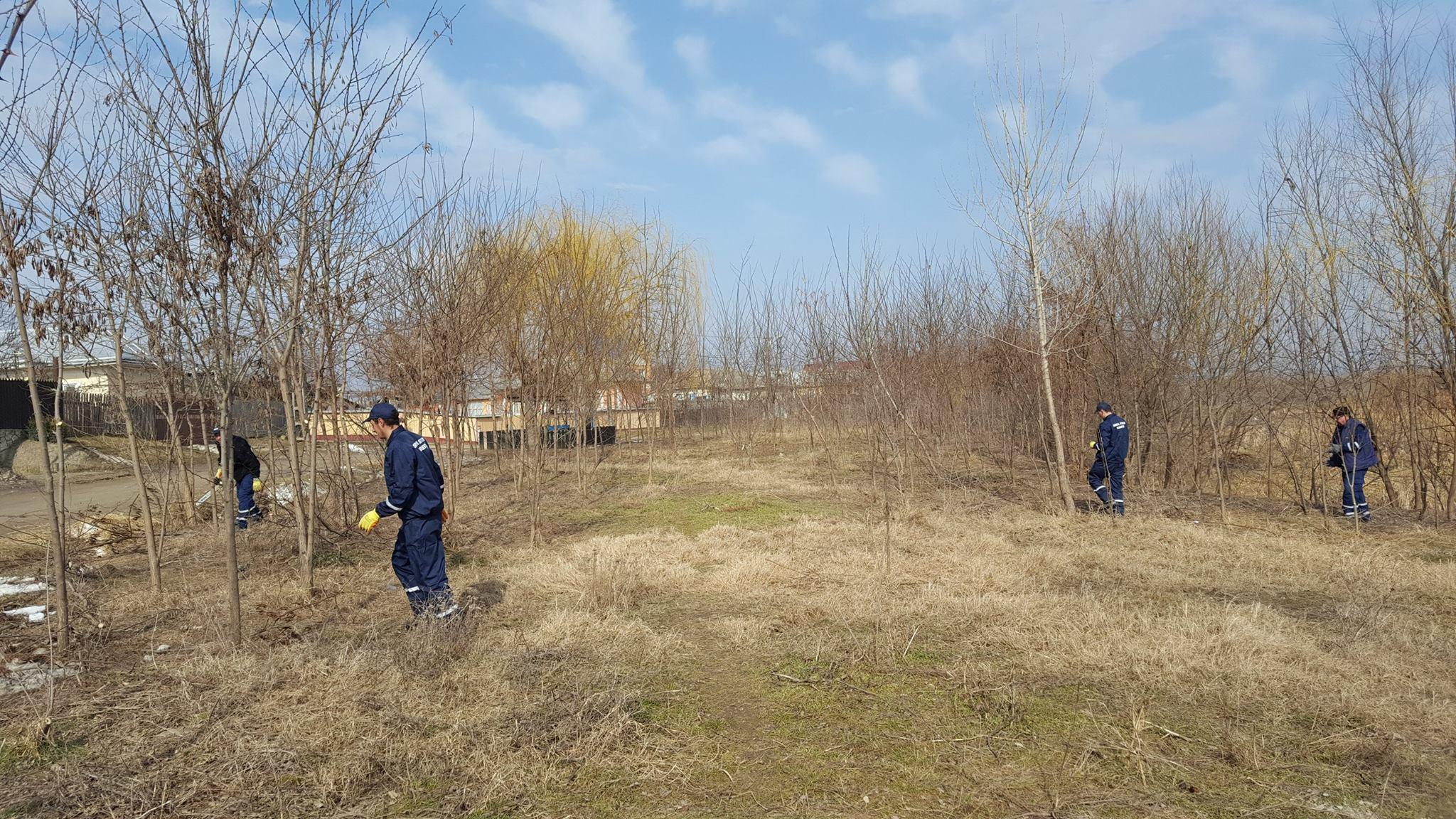 Câți arbori se vor planta în Roman anul acesta și unde