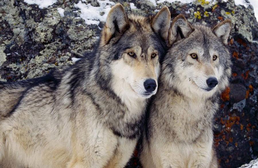 Se face inventarul animalelor protejate din Neamț