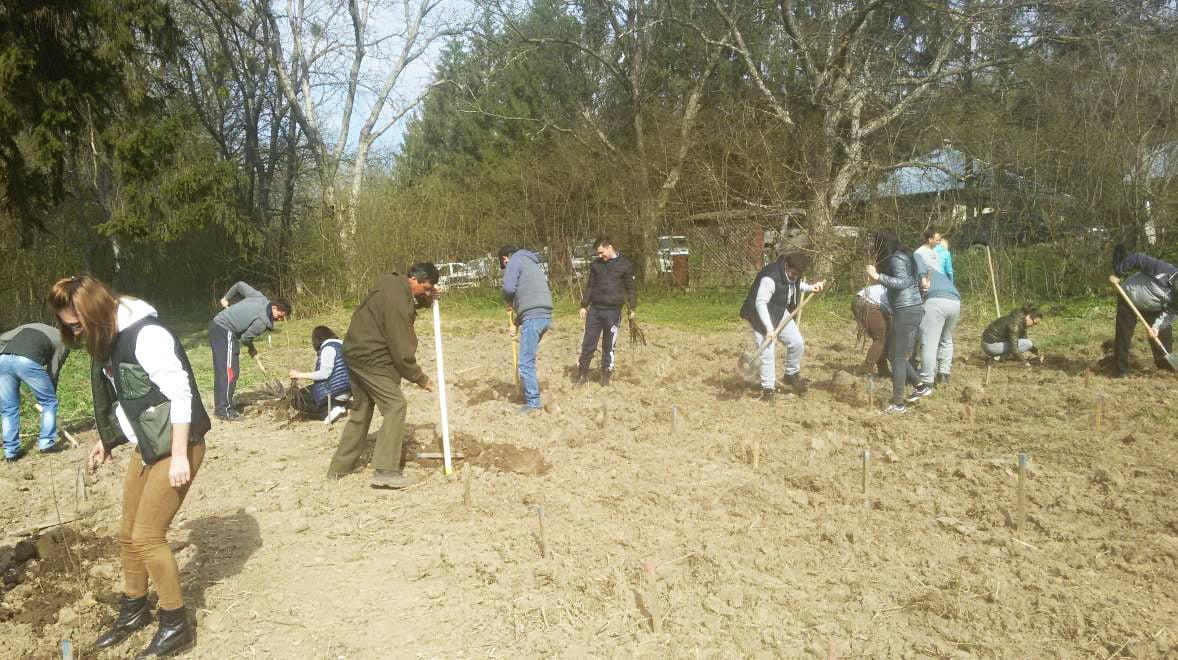 Polițiștii au plantat sute de puieţi, la Vulpășești