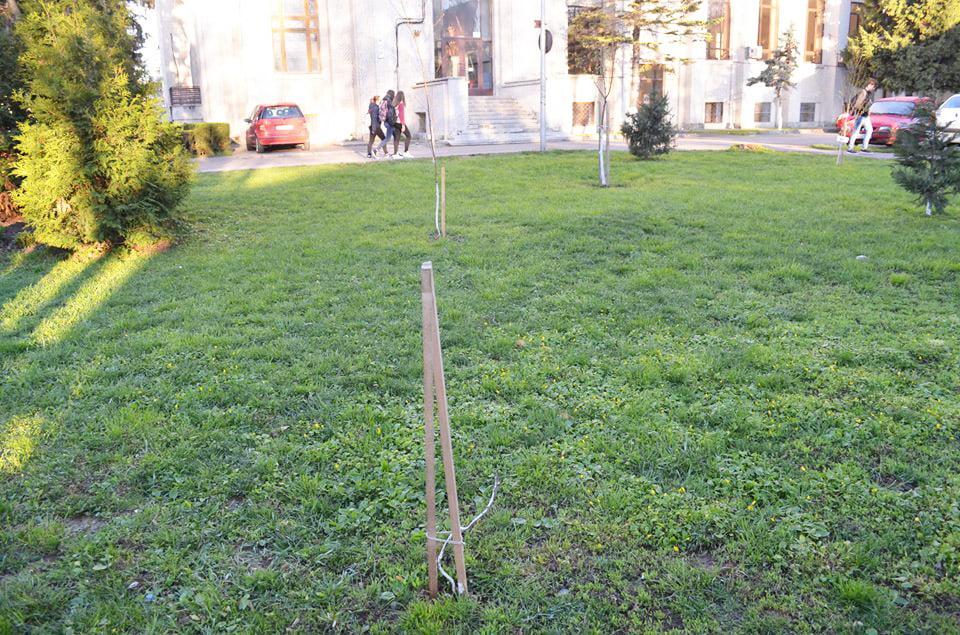 Puieții și tutorii de sprijin din parcul de la Muzeul de Artă au fost vandalizați