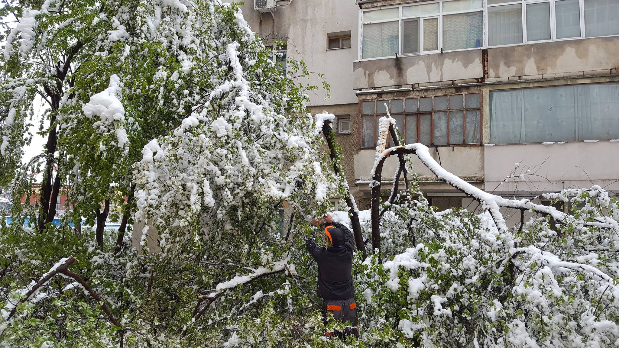 Iarna din aprilie a distrus 600 de arbori din Roman