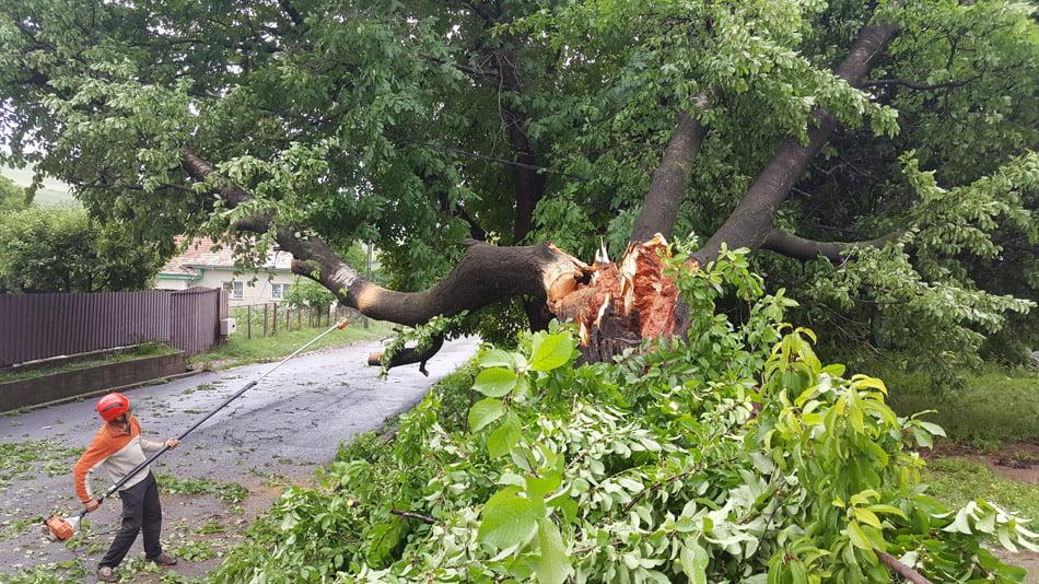 Arbori doborâți de furtună, curți și drumuri inundate, în urma ploilor de miercuri