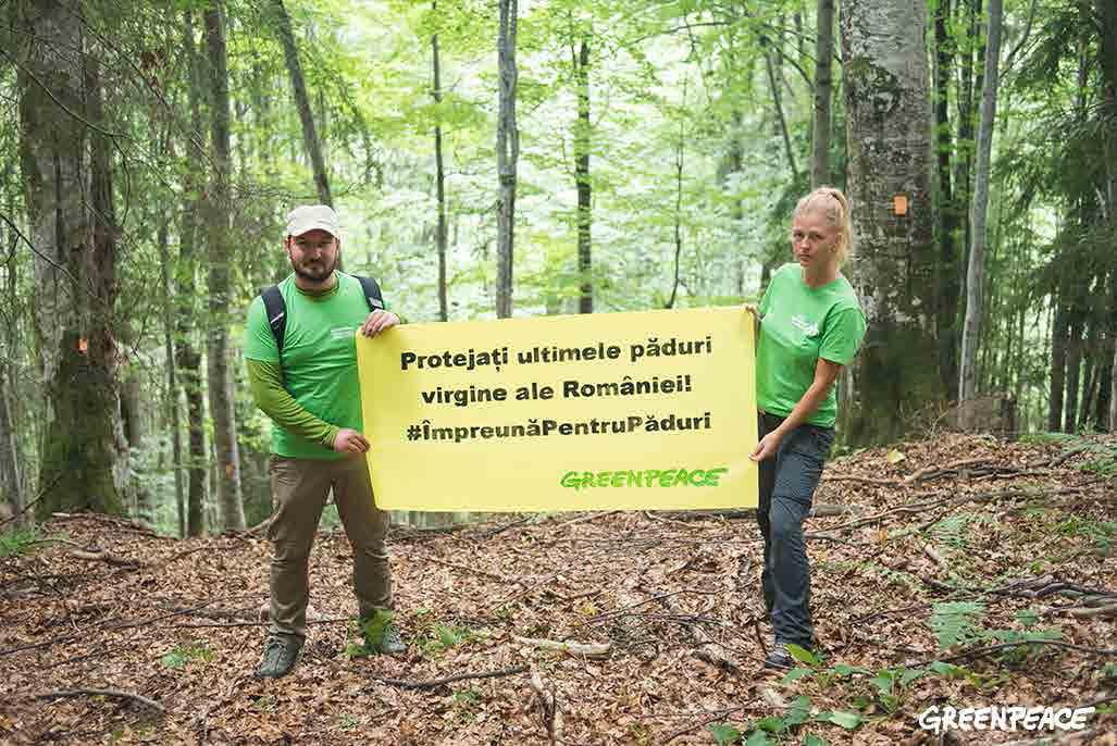 Județul Neamț, în topul județelor cu tăieri ilegale de arbori, în 2016, conform raportului Greenpeace România