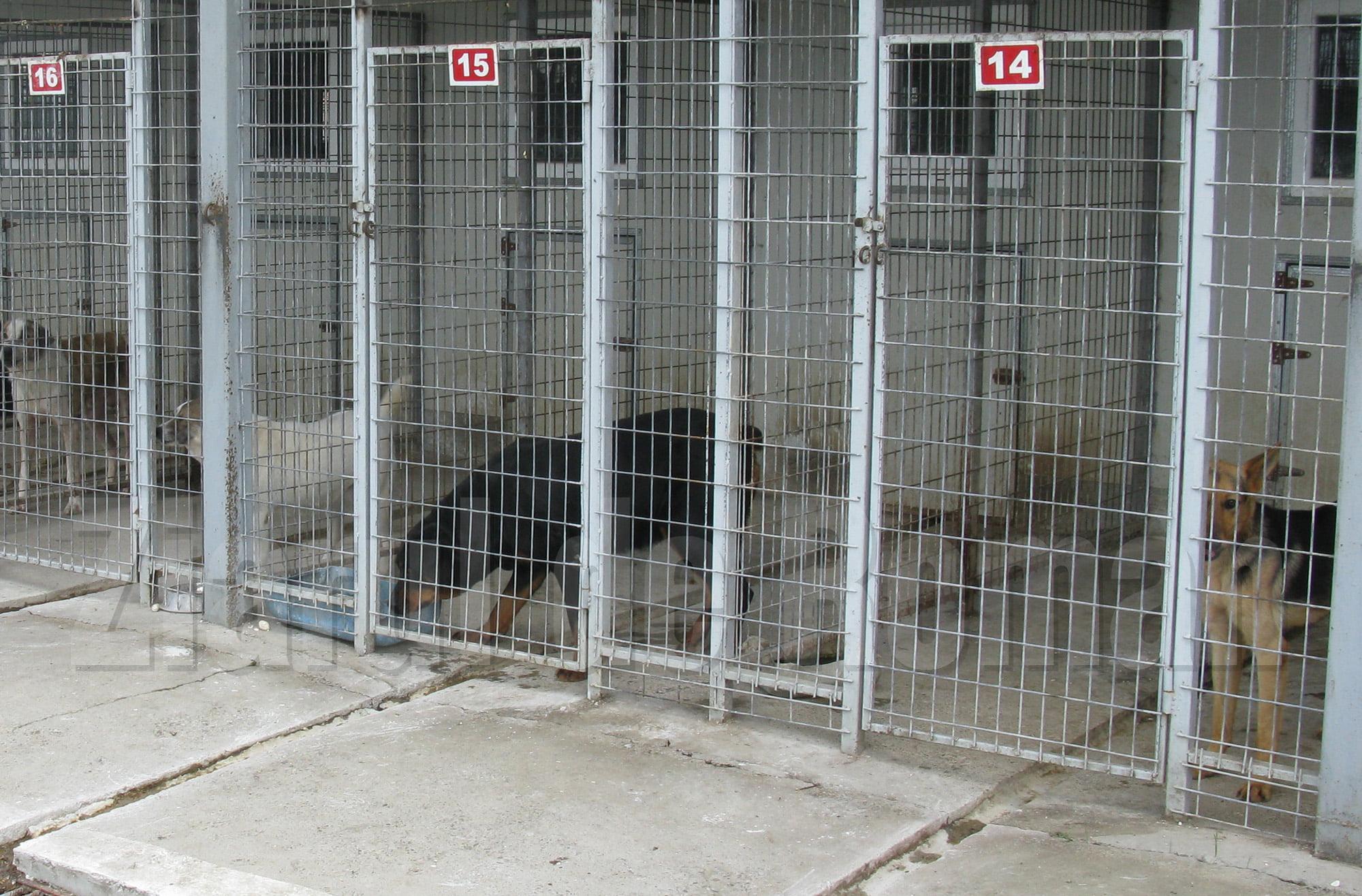 Câinii fără stăpân din mediul rural ar putea fi aduși la Roman