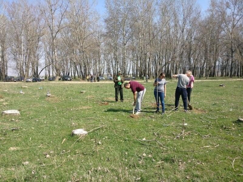 Polițiștii au plantat arbori în zăvoiul de lângă Siret