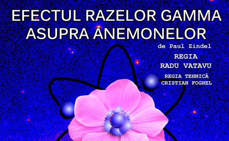 """Teatrul """"Dan Alecsandrescu"""" prezintă luni piesa """"Efectul razelor gamma asupra anemonelor"""""""