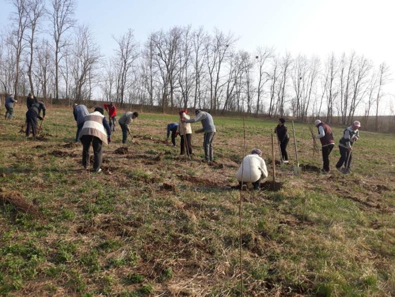 """Zeci de mii de puieți au fost plantați cu sprijinul Arhiepiscopiei Romanului și Bacăului, în campania """"Prețuiește viața, prețuiește natura"""""""