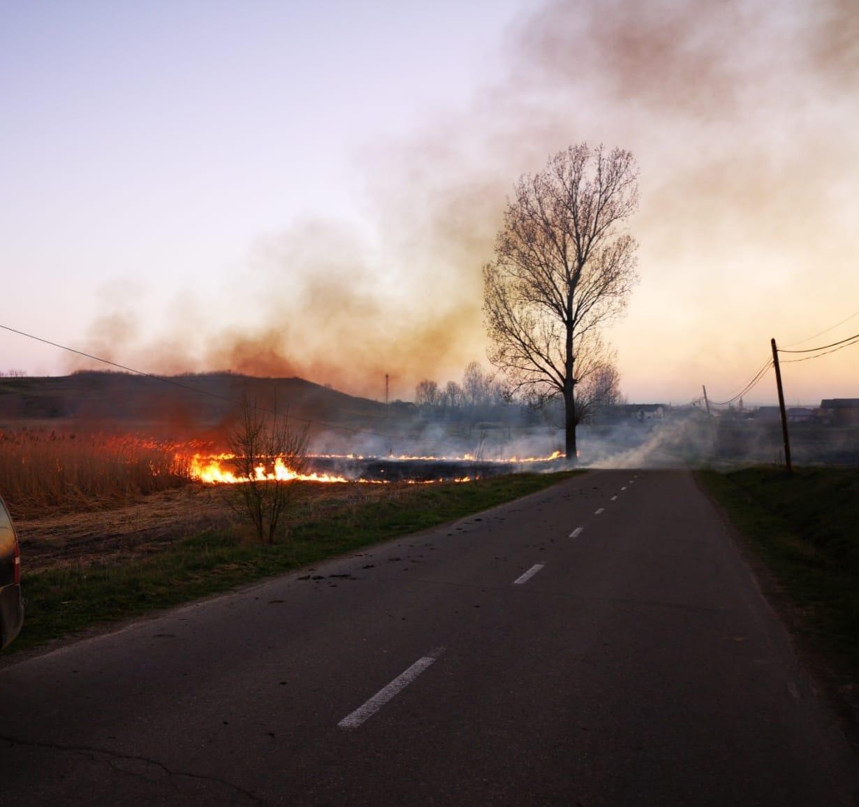 Peste 100 de arbori afectați de un incendiu, la Gherăești