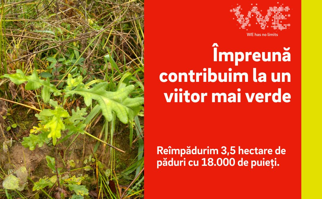 Peste 3,5 hectare de teren, reîmpădurite de E.ON România