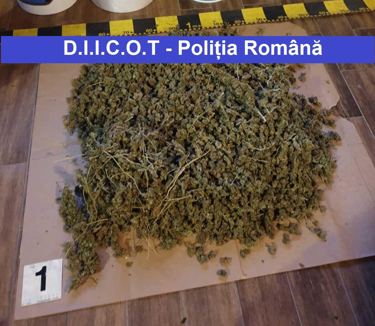 Percheziții în Neamț la traficanți de droguri. Patru persoane au fost reținute