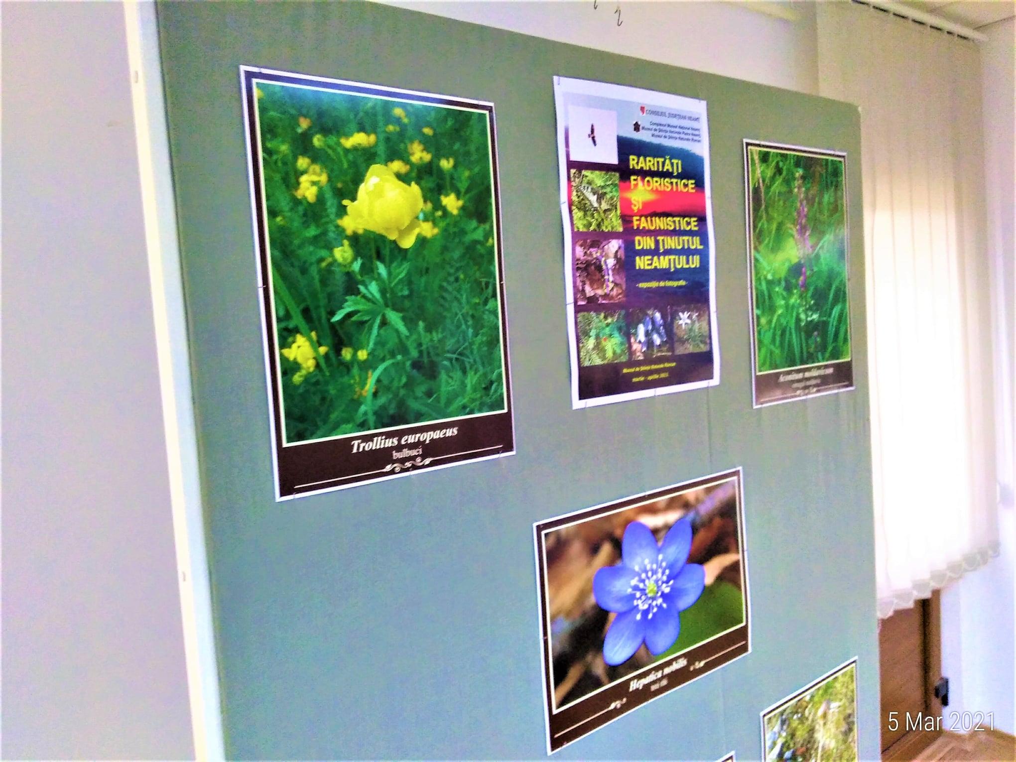 """Expoziția """"Rarităţi floristice și faunistice din ţinutul Neamţului"""", la Muzeul de Științe Naturale"""